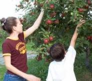 りんご親子